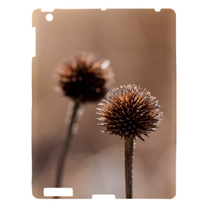 Withered Globe Thistle In Autumn Macro Apple iPad 3/4 Hardshell Case