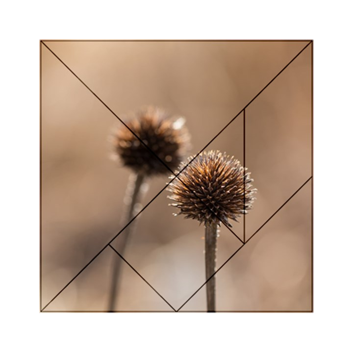 Withered Globe Thistle In Autumn Macro Acrylic Tangram Puzzle (6  x 6 )
