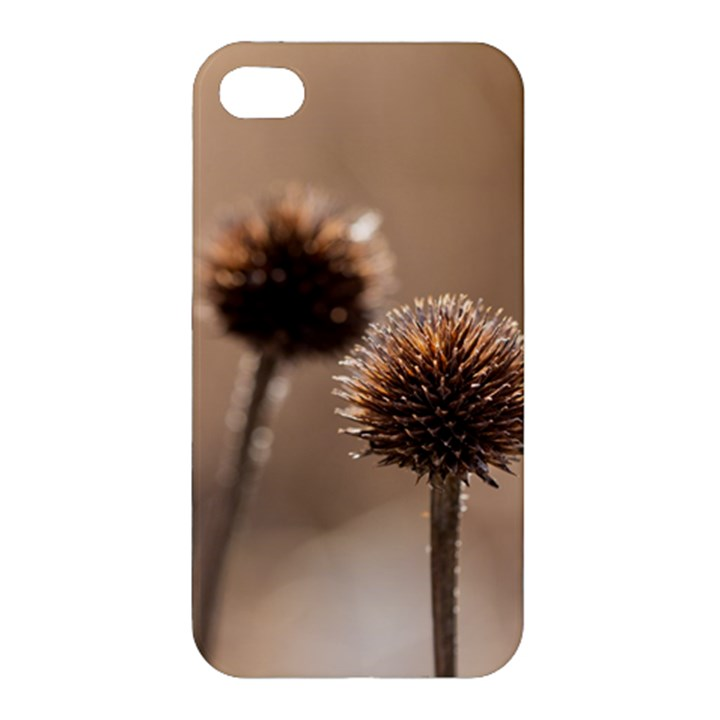 Withered Globe Thistle In Autumn Macro Apple iPhone 4/4S Premium Hardshell Case
