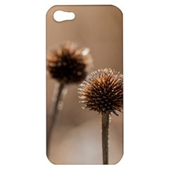 Withered Globe Thistle In Autumn Macro Apple Iphone 5 Hardshell Case