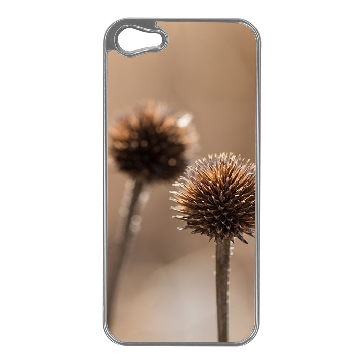 Withered Globe Thistle In Autumn Macro Apple iPhone 5 Case (Silver)