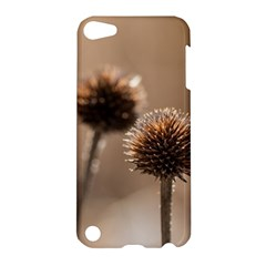 Withered Globe Thistle In Autumn Macro Apple Ipod Touch 5 Hardshell Case