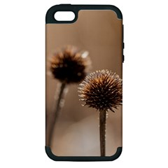 Withered Globe Thistle In Autumn Macro Apple Iphone 5 Hardshell Case (pc+silicone)