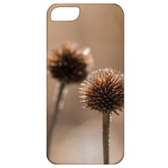 Withered Globe Thistle In Autumn Macro Apple iPhone 5 Classic Hardshell Case
