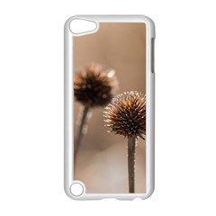 Withered Globe Thistle In Autumn Macro Apple Ipod Touch 5 Case (white)