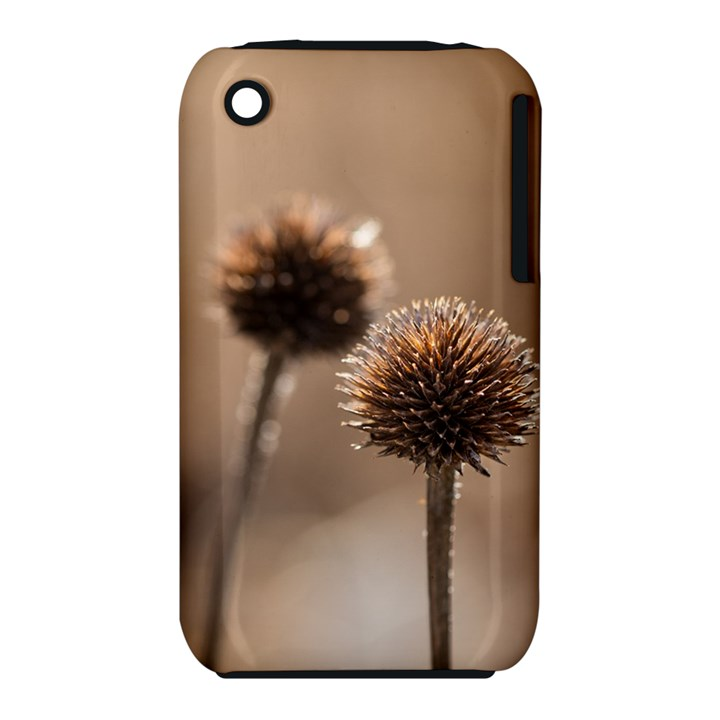 Withered Globe Thistle In Autumn Macro Apple iPhone 3G/3GS Hardshell Case (PC+Silicone)