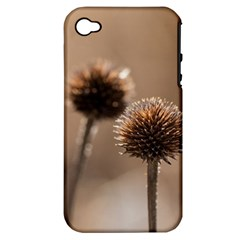 Withered Globe Thistle In Autumn Macro Apple Iphone 4/4s Hardshell Case (pc+silicone)