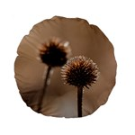 Withered Globe Thistle In Autumn Macro Standard 15  Premium Round Cushions Back