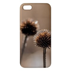 Withered Globe Thistle In Autumn Macro Apple Iphone 5 Premium Hardshell Case