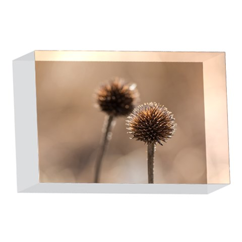 Withered Globe Thistle In Autumn Macro 4 x 6  Acrylic Photo Blocks