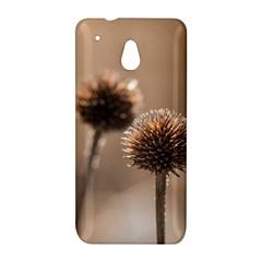 Withered Globe Thistle In Autumn Macro HTC One Mini (601e) M4 Hardshell Case
