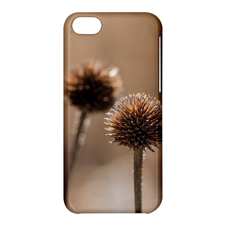 Withered Globe Thistle In Autumn Macro Apple iPhone 5C Hardshell Case