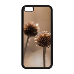 Withered Globe Thistle In Autumn Macro Apple Iphone 5c Seamless Case (black)