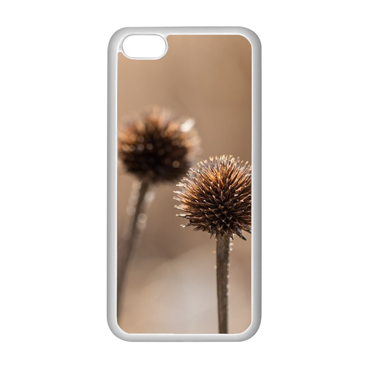 Withered Globe Thistle In Autumn Macro Apple iPhone 5C Seamless Case (White)