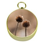 Withered Globe Thistle In Autumn Macro Gold Compasses Front