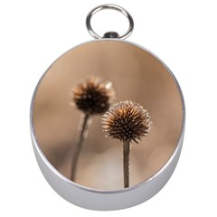 Withered Globe Thistle In Autumn Macro Silver Compasses