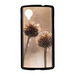 Withered Globe Thistle In Autumn Macro Nexus 5 Case (Black)