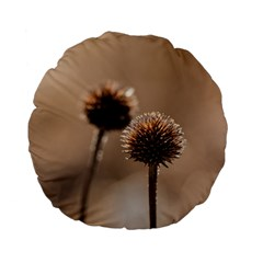 Withered Globe Thistle In Autumn Macro Standard 15  Premium Flano Round Cushions