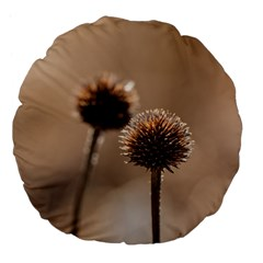 Withered Globe Thistle In Autumn Macro Large 18  Premium Flano Round Cushions