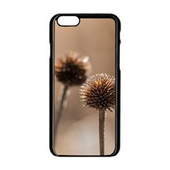 Withered Globe Thistle In Autumn Macro Apple Iphone 6/6s Black Enamel Case