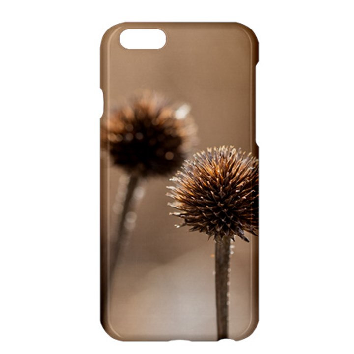 Withered Globe Thistle In Autumn Macro Apple iPhone 6 Plus/6S Plus Hardshell Case