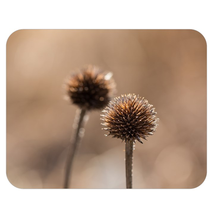 Withered Globe Thistle In Autumn Macro Double Sided Flano Blanket (Medium)