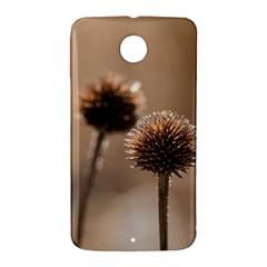 Withered Globe Thistle In Autumn Macro Nexus 6 Case (White)