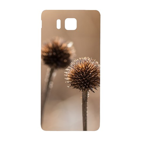 Withered Globe Thistle In Autumn Macro Samsung Galaxy Alpha Hardshell Back Case