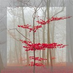 Magic forest in red and white Mini Canvas 8  x 8  8  x 8  x 0.875  Stretched Canvas