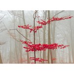 Magic forest in red and white BOY 3D Greeting Card (7x5) Back
