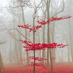 Magic forest in red and white Twin Heart Bottom 3D Greeting Card (8x4) Inside