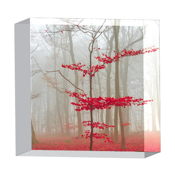 Magic forest in red and white 5  x 5  Acrylic Photo Blocks