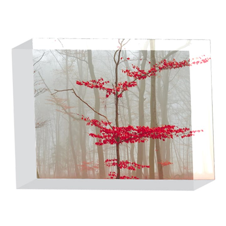 Magic forest in red and white 5 x 7  Acrylic Photo Blocks