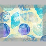 Seashells Deluxe Canvas 16  x 12   16  x 12  x 1.5  Stretched Canvas