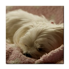 Maltese Sleeping Tile Coasters