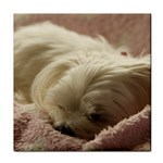 Maltese Sleeping Tile Coasters Front