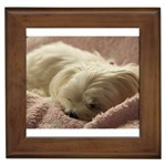 Maltese Sleeping Framed Tiles Front