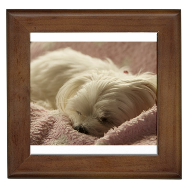 Maltese Sleeping Framed Tiles