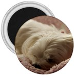 Maltese Sleeping 3  Magnets Front