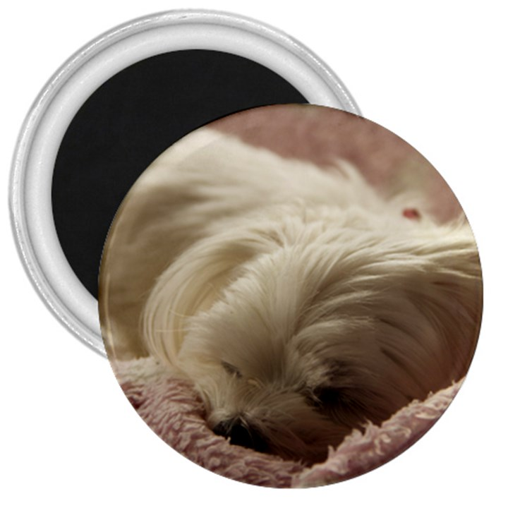 Maltese Sleeping 3  Magnets