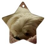 Maltese Sleeping Ornament (Star)  Front