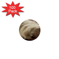 Maltese Sleeping 1  Mini Buttons (100 pack)