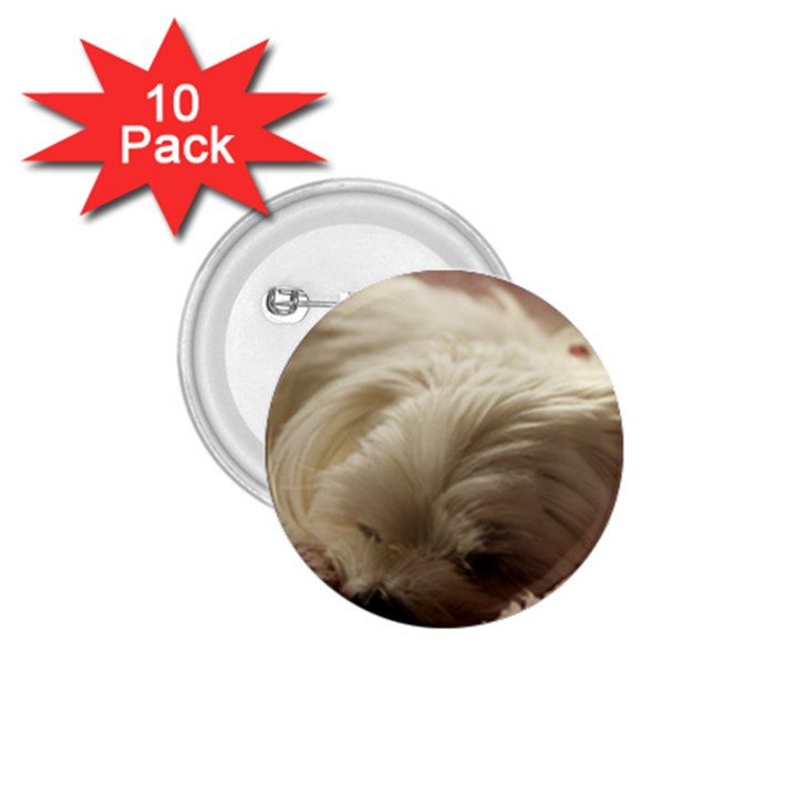 Maltese Sleeping 1.75  Buttons (10 pack)