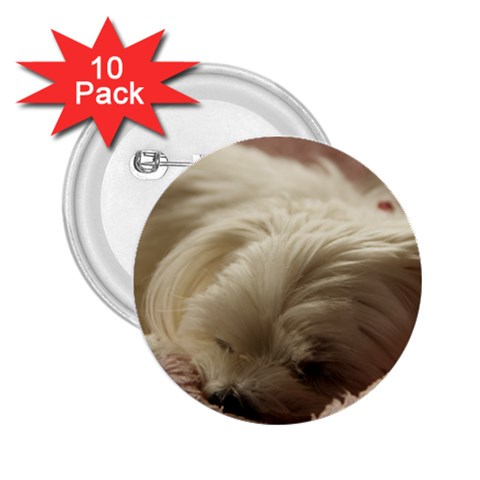 Maltese Sleeping 2.25  Buttons (10 pack)