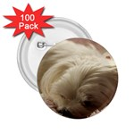 Maltese Sleeping 2.25  Buttons (100 pack)  Front
