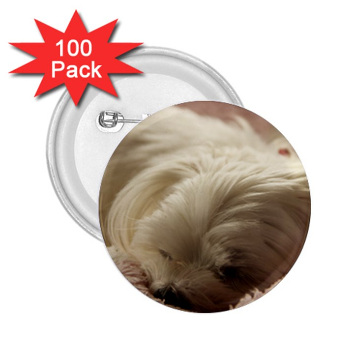 Maltese Sleeping 2.25  Buttons (100 pack)