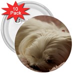 Maltese Sleeping 3  Buttons (10 pack)  Front