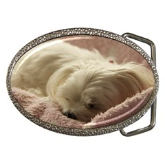 Maltese Sleeping Belt Buckles