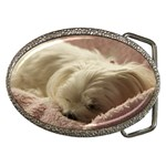 Maltese Sleeping Belt Buckles Front