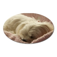 Maltese Sleeping Oval Magnet